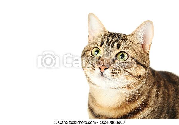 Hermoso gato aislado en un fondo blanco - csp40888960