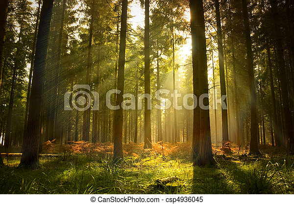 hermoso, bosque - csp4936045