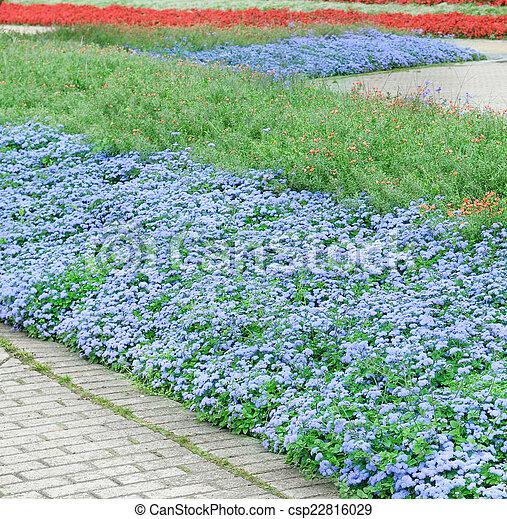 Hermosas flores y caminos - csp22816029