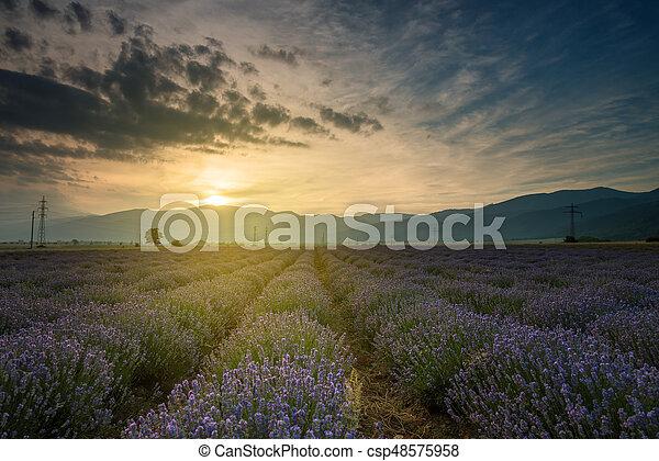 Campos de lavanda. Hermosa imagen de campo de lavanda - csp48575958
