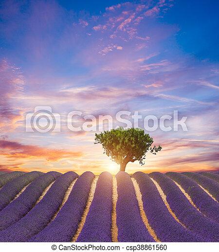 Hermoso paisaje de campo de lavanda - csp38861560