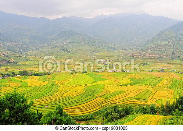 Hermoso Campo De Arroz Con Terraza En Vietnam Del Noroeste