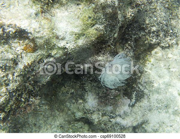 Un hermoso gusano coral cerca - csp69100528
