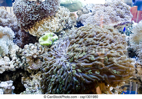Hermoso coral - csp1301980