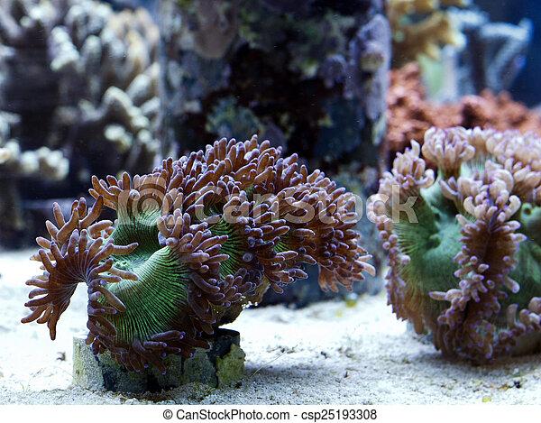 Hermoso coral - csp25193308