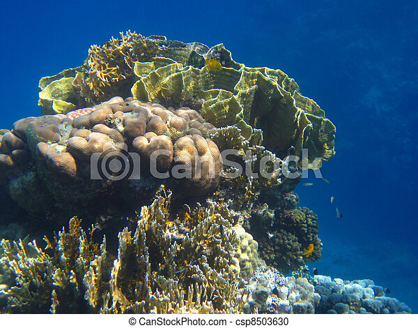Hermoso coral - csp8503630