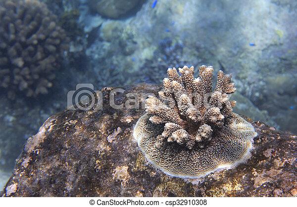 Hermoso arrecife de coral. - csp32910308