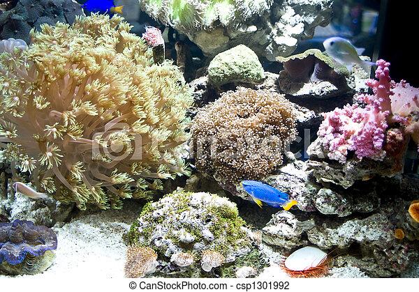 hermoso, coral - csp1301992