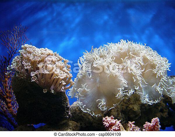 hermoso, coral - csp0604109