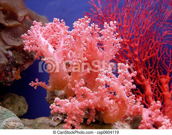 hermoso, coral - csp0604119