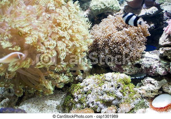 Hermoso coral - csp1301989