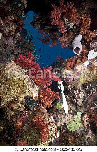 Hermoso coral - csp2485726