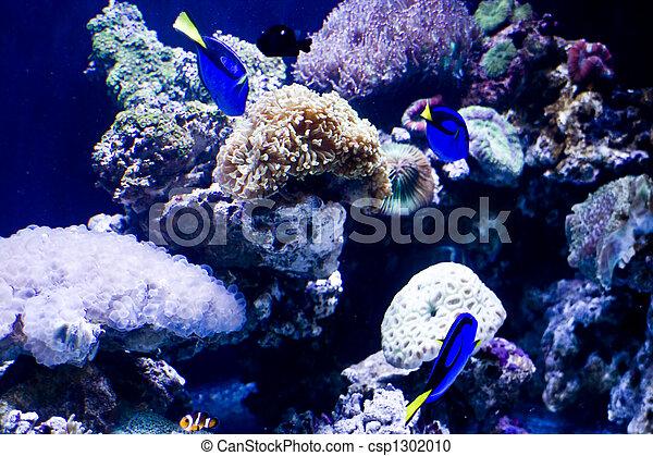 Hermosos peces coral y coral - csp1302010