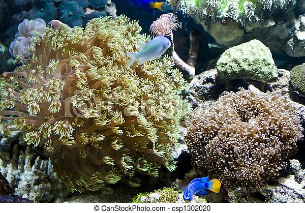 Hermosos peces coral y coral - csp1302020