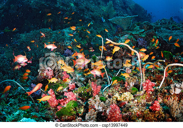 Hermoso arrecife de coral y pescado colorido - csp13997449