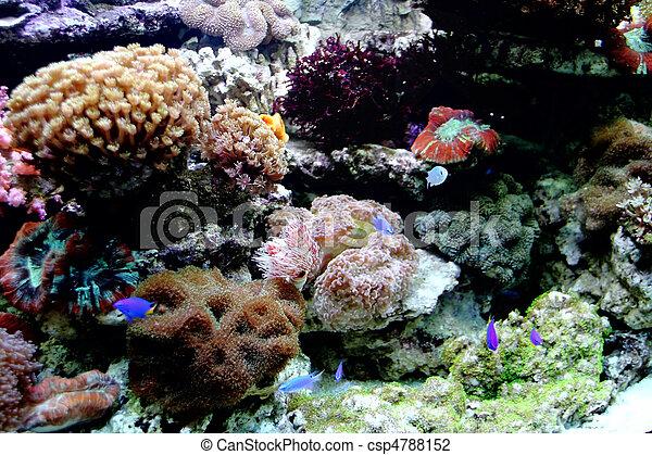 Hermosos peces coral y coral - csp4788152