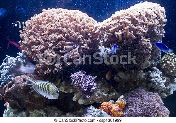 Hermosos peces coral y coral - csp1301999