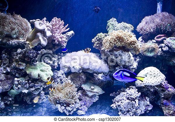 Hermosos peces coral y coral - csp1302007