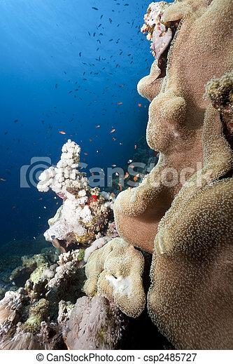 Hermoso coral - csp2485727
