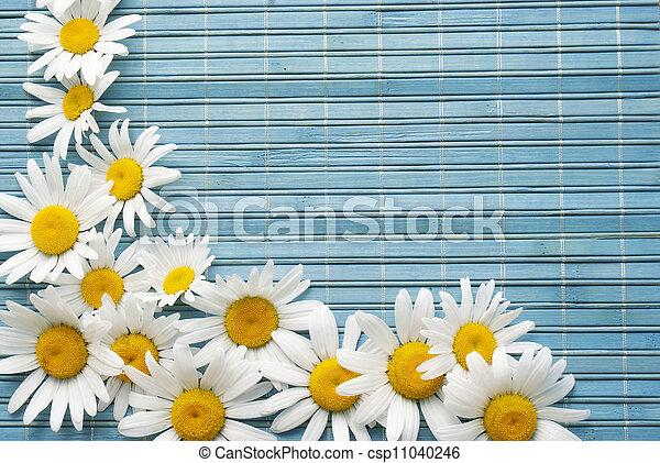 hermoso, flor, frontera - csp11040246