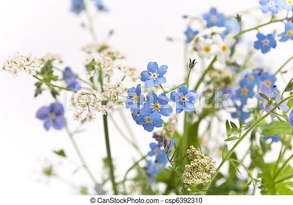 Hermosas flores azules - csp6392310