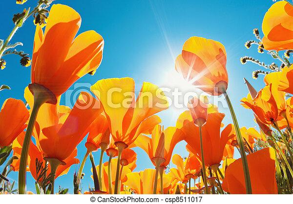 hermoso, flores del resorte - csp8511017