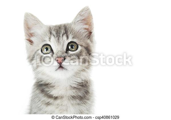 Hermoso gato en un fondo blanco - csp40861029