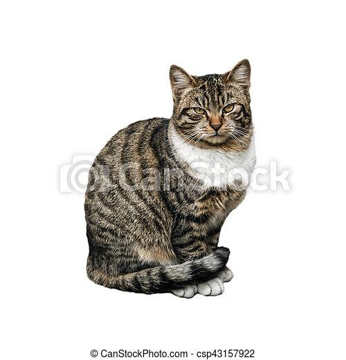 Hermoso gato en fondo blanco - csp43157922