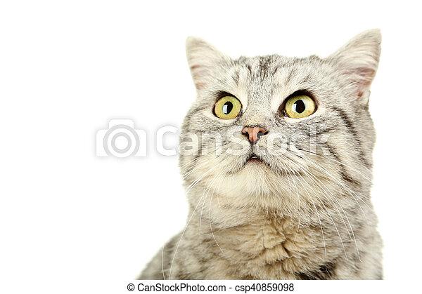 Hermoso gato en un fondo blanco - csp40859098