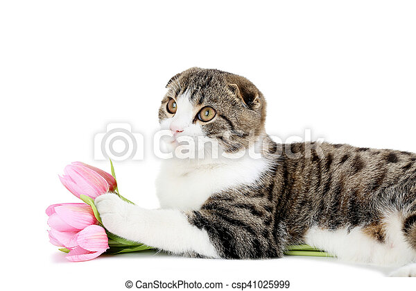 Hermoso gato en un fondo blanco - csp41025999