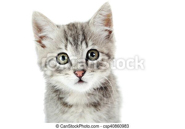 Hermoso gato en un fondo blanco - csp40860983