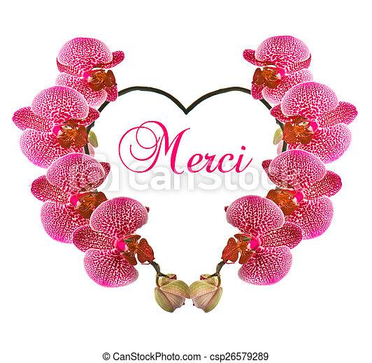 Hermoso Forma Corazón Flor Orquídea Hermoso Corazón Flor