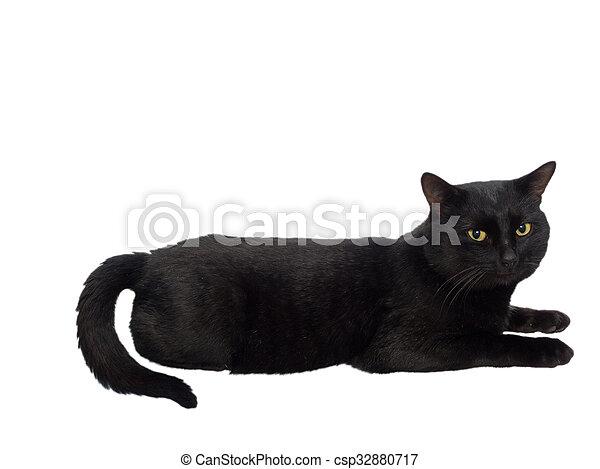 Gato negro hermoso - csp32880717