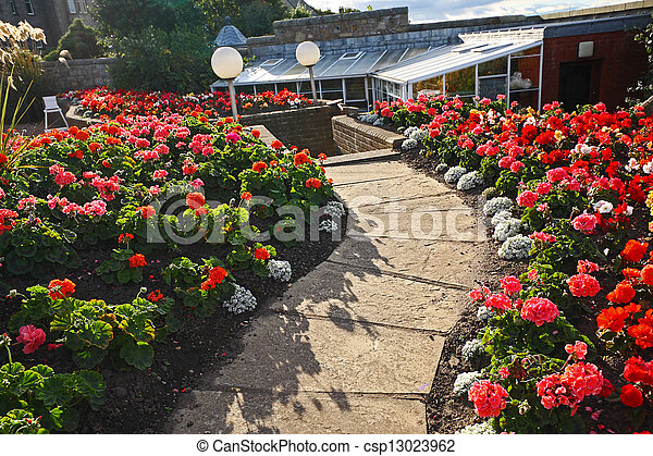 Hermoso jardín con flores de geranio rojo - csp13023962