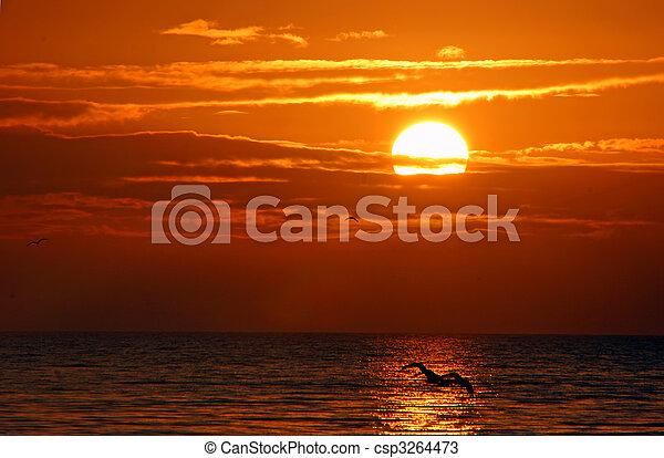 hermoso, isla, florida, salida del sol, sanibel - csp3264473