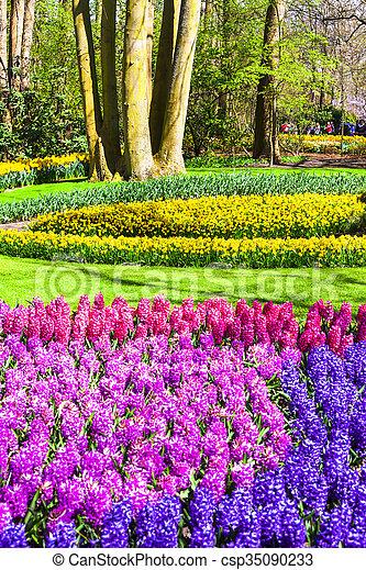 Hermoso keukenhof parque famoso floral jardines - Jardines de holanda ...