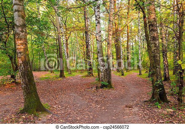 Bosques mixtos rusos con hermosos abedules - csp24566072