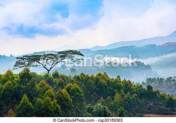 hermosas fotos de la casa en kerala Hermoso Paisaje Indio Con Rboles Y Montaas En Una Neblina