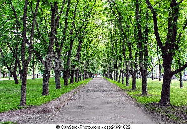 hermoso, muchos, parque, árboles verdes - csp24691622