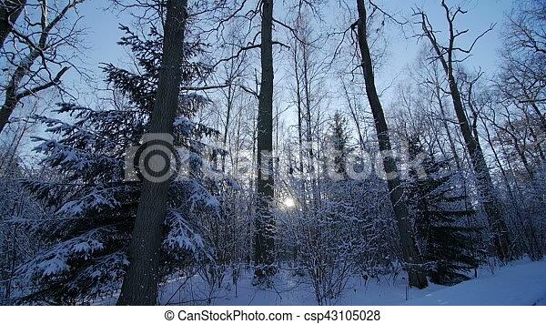 hermosas fotos de invierno naturaleza Hermoso Naturaleza Del Invierno Roble Nieve Rboles