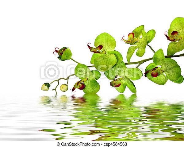 Hermosa orquídea - csp4584563