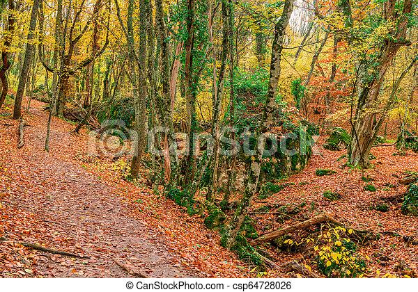 Hermoso paisaje de otoño en un bosque en una montaña - csp64728026