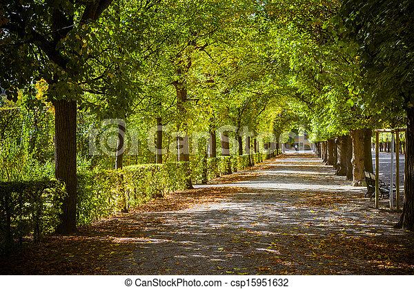 hermoso, otoño, parque, callejón - csp15951632
