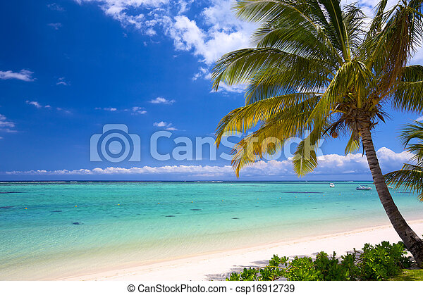 Hermosa playa tropical - csp16912739