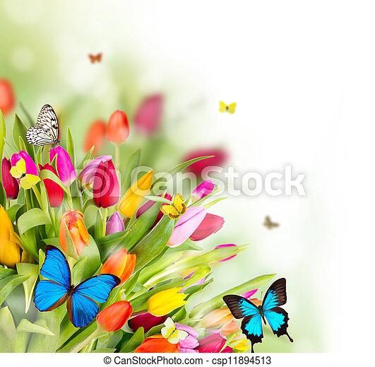 hermoso, primavera, mariposas, flores - csp11894513