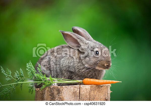 Conejo. Hermoso animal de la naturaleza - csp40631920