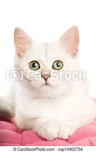 Hermosa gatita británica tirada en una almohada rosa. Aislado de fondo blanco - csp10402754