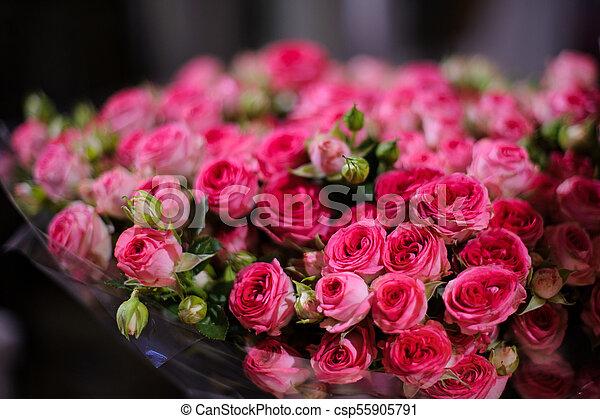 Hermoso Rosa Amazingly Rosas Plano De Fondo Carmesí