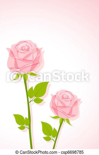 Hermosa rosa - csp6698785