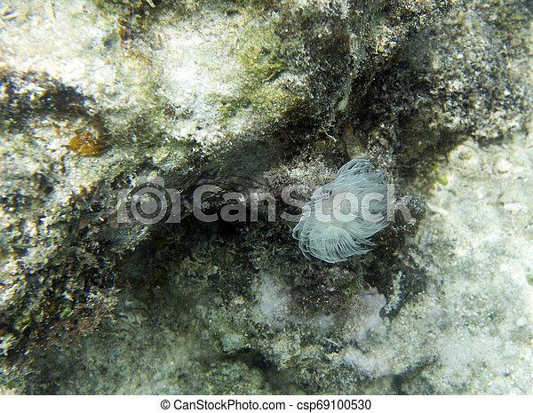 Un hermoso gusano coral cerca de las islas Togian - csp69100530